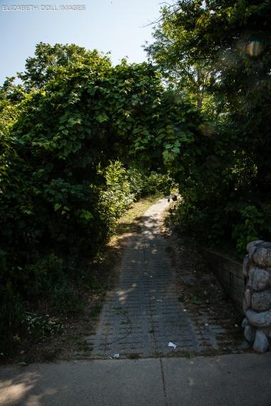 Path in Sleeping Bear Dunes